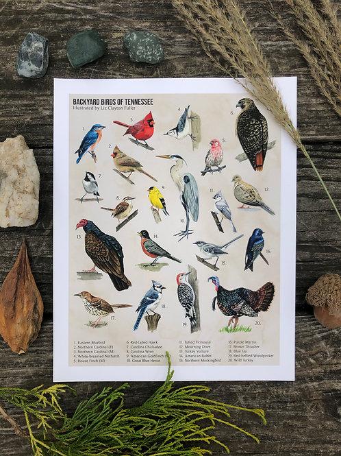 Backyard Birds of Tennessee | Art Print