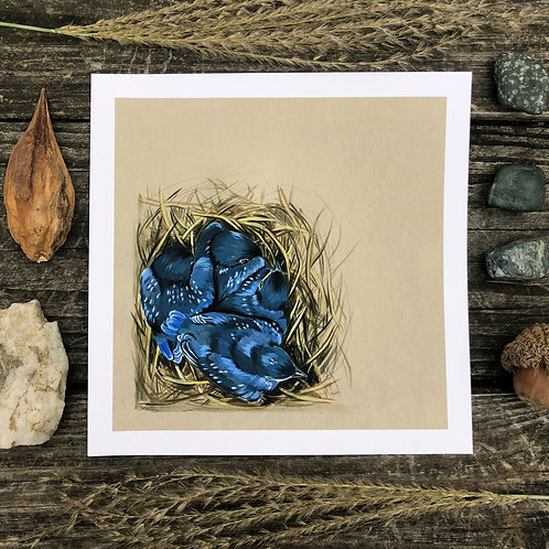Bluebird Babies in the Nest | Art Print
