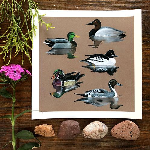 Duck Reflections | Art Print