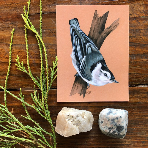 White-breasted Nuthatch | Tiny Art Print
