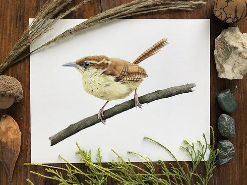 Carolina wren | Art Print