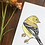 Thumbnail: American Goldfinch