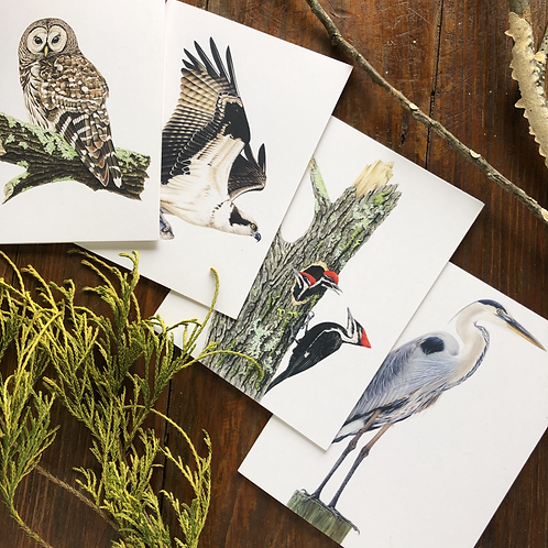 Birds of the Rivers and Forests Notecard Pack