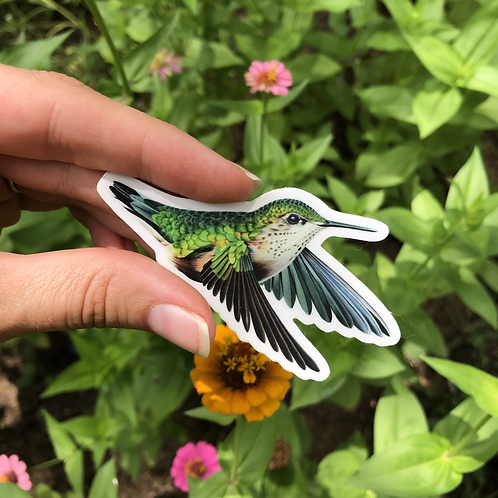 Calliope Hummingbird Sticker
