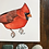 Thumbnail: Northern Cardinal