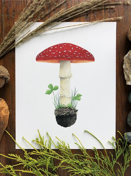 Amanita Mushroom | Signed Art Print