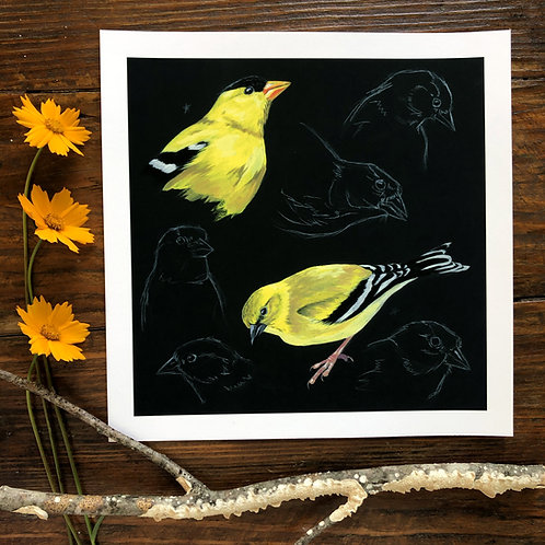 Goldfinch Studies   Art Print