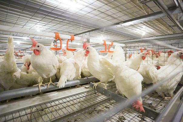 AEB-mediakit-enriched-egg-farming.jpg