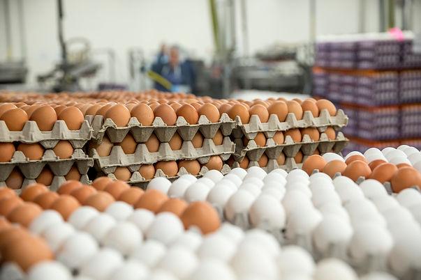 AEB-mediakit-brown-and-white-eggs.jpg