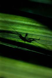 living_shadow.jpg