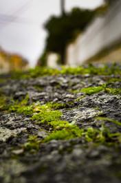 street_nature.jpg