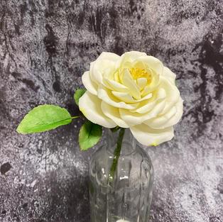 tues eve open sugar rose jan 21