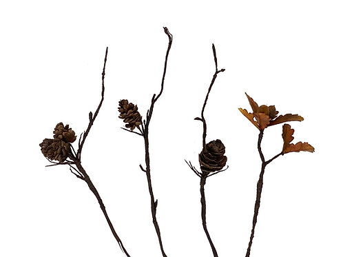 Fir Cones and Oak