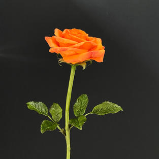 Wednesday am finished rose april 2021