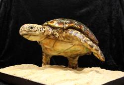 Gravity defying turtle