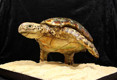 turtle underneath black background.jpg
