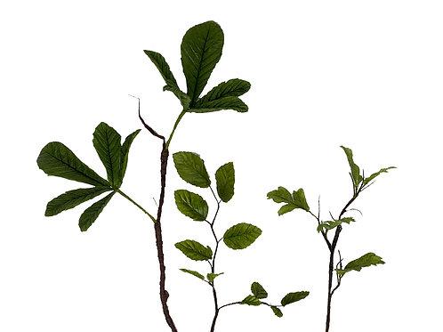 Wild green foliage