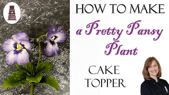 How to make a pansy plant