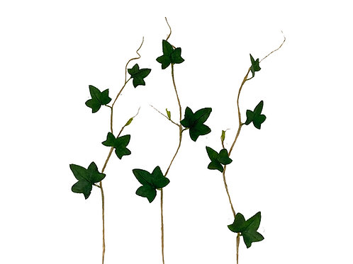 Stems of Ivy