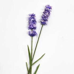 wed am lavender jan 21