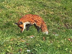 fox in grass phone pic.jpg