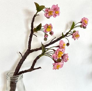 wed am cherry blossom april 2021