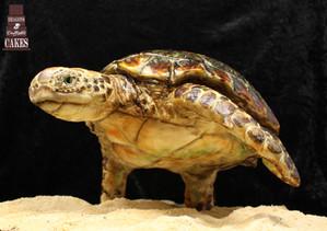 Gravity defying turtle £450