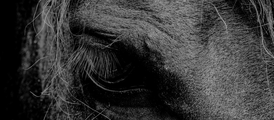On The Cold White Floor, In an Empty Gallery, Lies a Silent Black Horse. Whats Next Will Horrify You