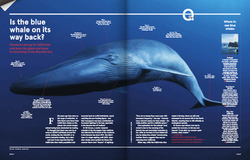 Is the Blue Whale on its way back?