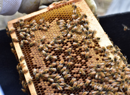 Hive Inspection 4/18/20