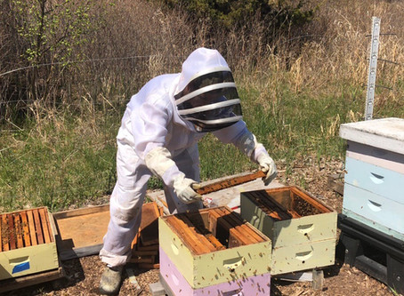 Splitting Our Bee Hives