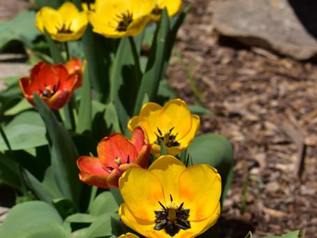 Beautiful Spring Day