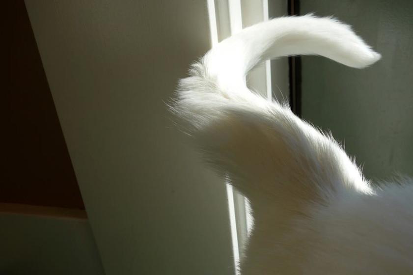 Blackhall-cattail.jpg