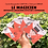 Thumbnail: Carte Bougeotte Carton x ORpair LE MAGICIEN