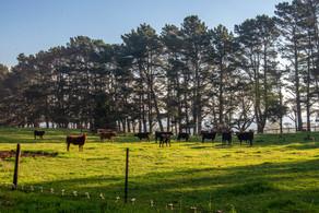 Wildes Meadow -50.jpg