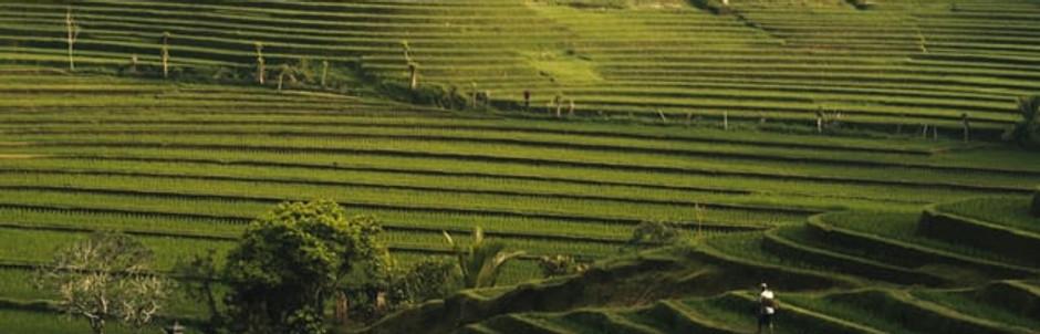 Nikon - Bali Lens Series
