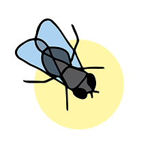 musca-carre-19.png