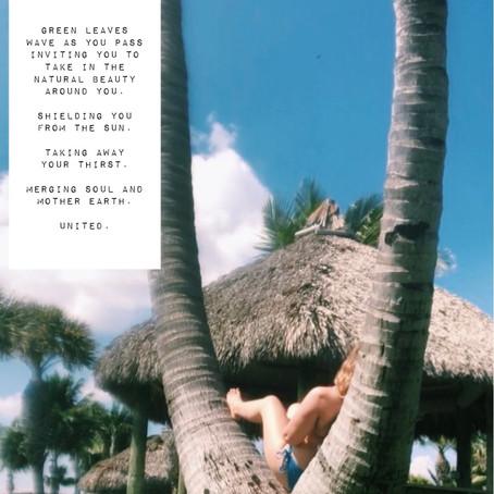 Palm Tree by Bergen B.