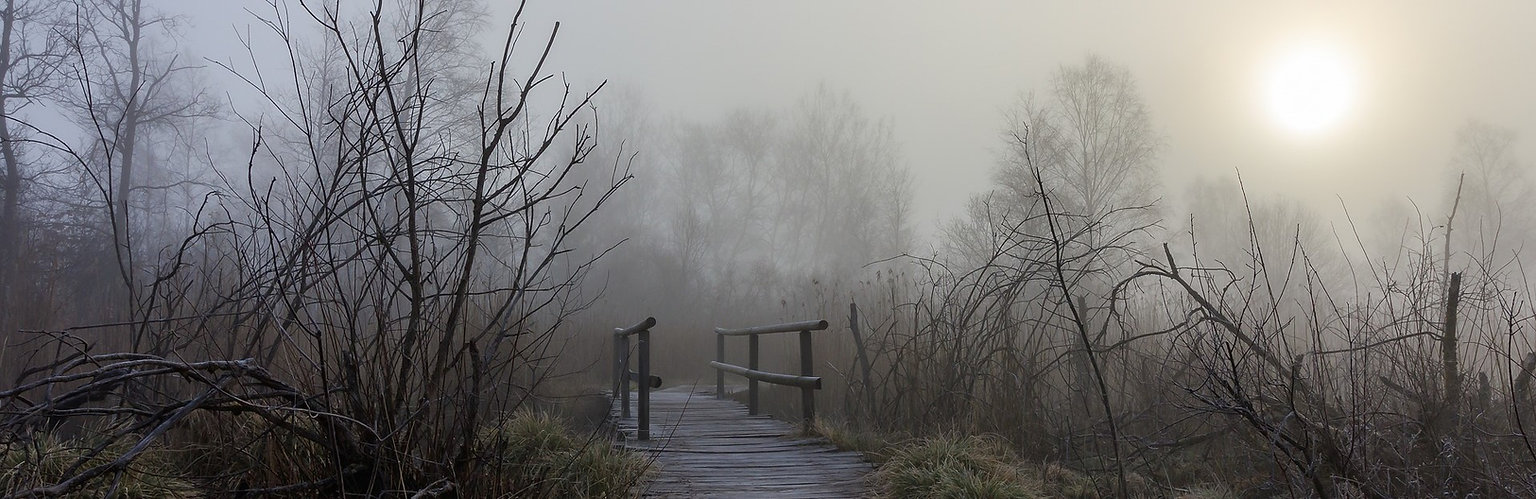 Copy of misty wooden path (2).jpg