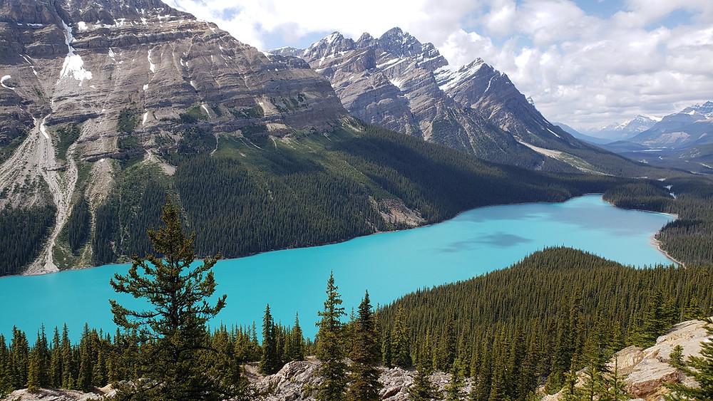 Teal blue Peyto Lake, Canadian Rockies