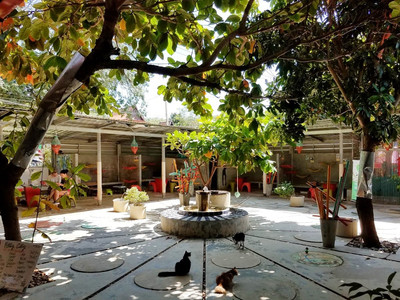 Shady courtyard in Lanta animal welfare