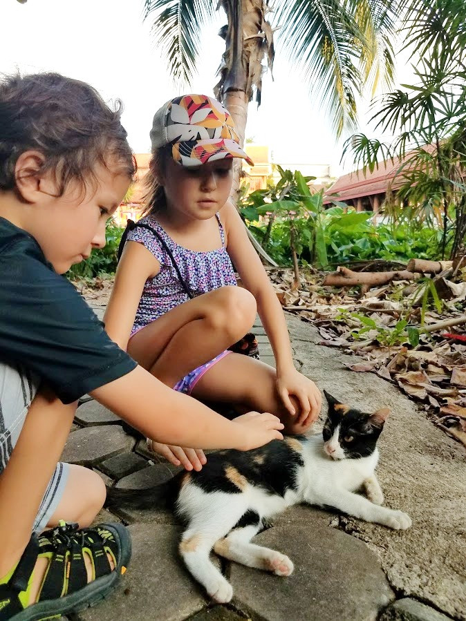 Kids petting a friendly stray kitten