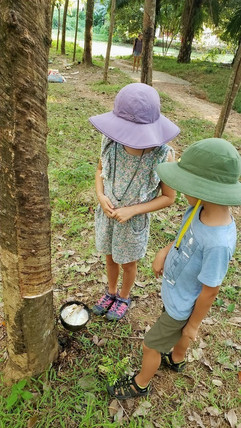 Kids looking at rubber trees in Koh Lanta