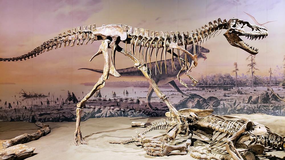 Incredible dinosaur replicas at Royal Tyrrell Museum, Alberta