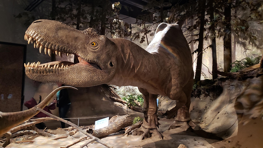 Giant tyrannosaurus rex at Royal Tyrrell Museum