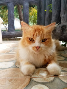 Cute cat in front of our porch in Harvest House, Koh Lanta