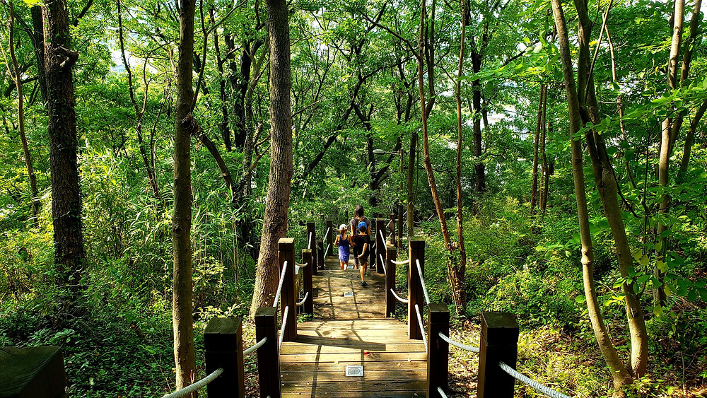 Jeonju forest path