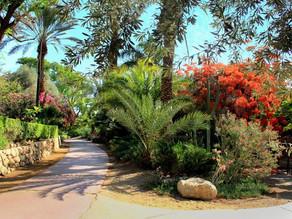 Ein Gedi Botanical Gardens