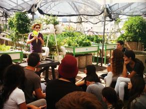 Green in the City – Urban Farming Workshops
