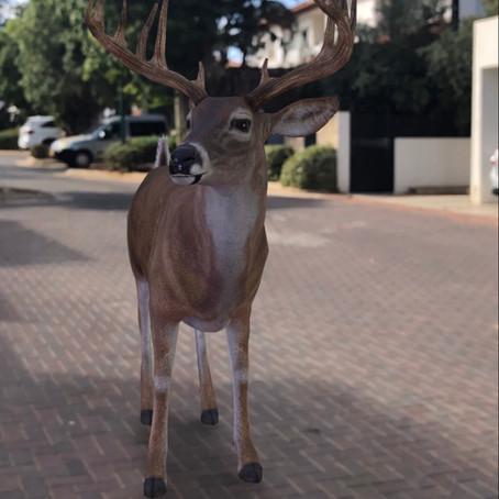 Lockdown Fun with AR Animals